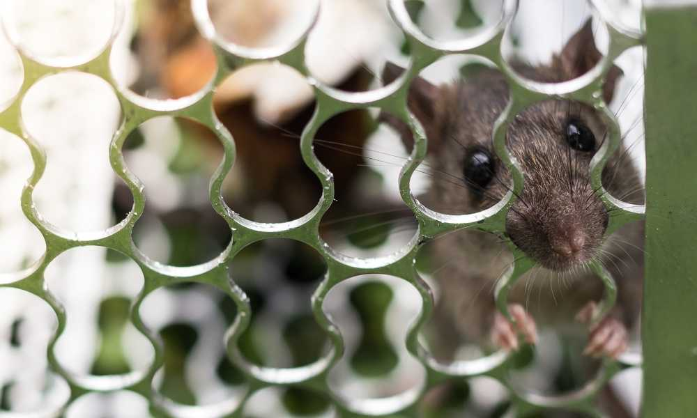 How-to-Bait-a-Mouse-Trap